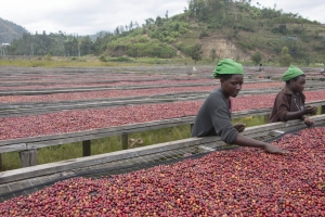 Rwanda Gatare - Natural