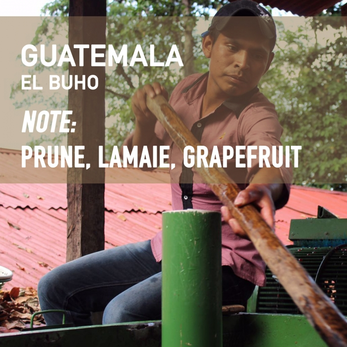Guatemala El Buho, Cafea de Specialitate 0