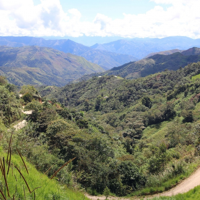 Peru Huamantanga - Cafea de Specialitate