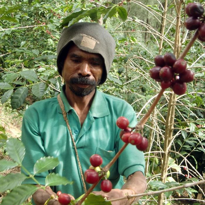 East Timor  Eratoi - Cafea de Specialitate