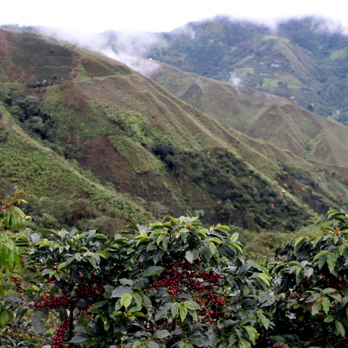 Peru Juan Heredia - Cafea de Specialitate