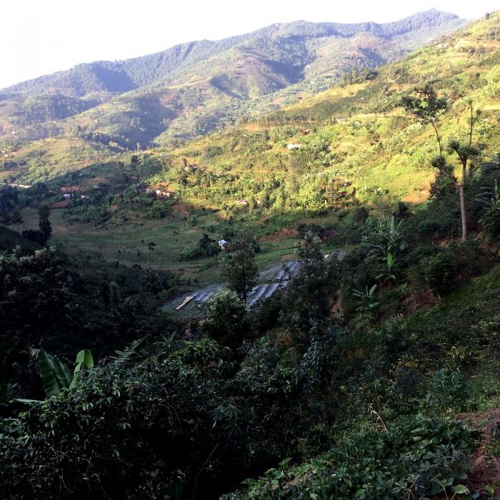 Rwanda Gitwe, Cafea de Specialitate 2