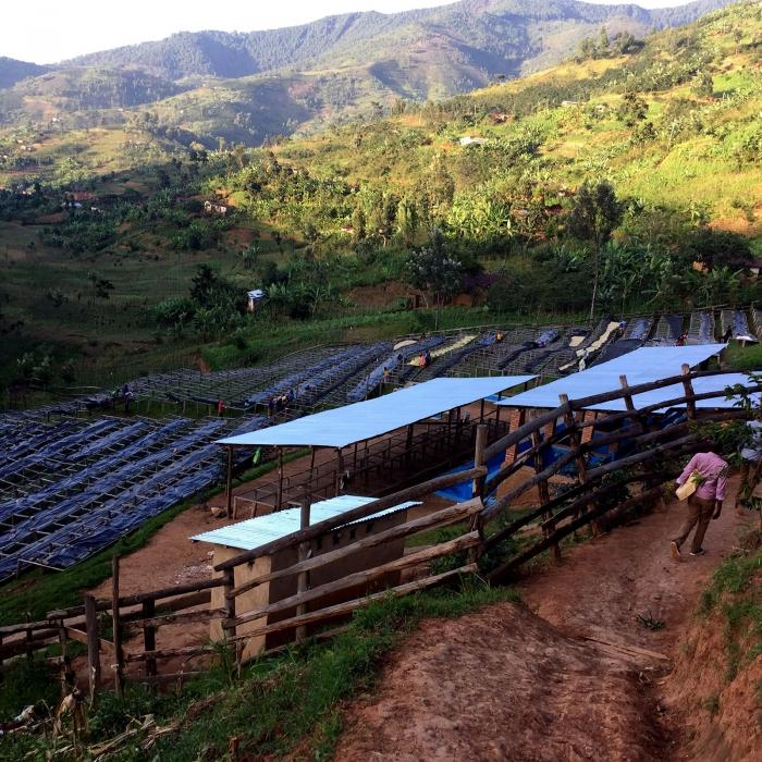 Rwanda Gitwe, Cafea de Specialitate 3